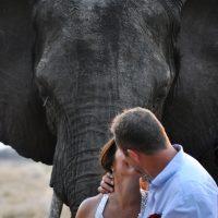 Wedding Safaris