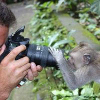 Photographic Safaris