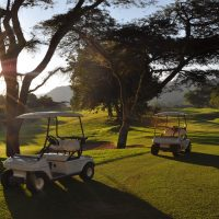 Golfing Safaris